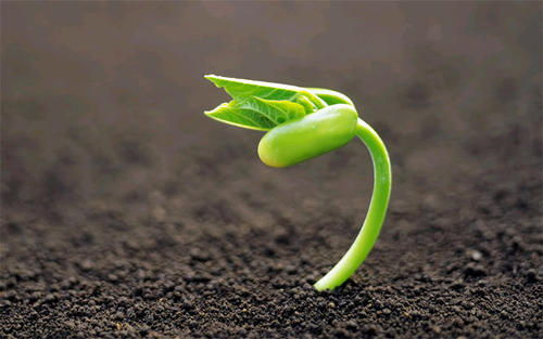 2021年最新种子行业税收筹划方案!