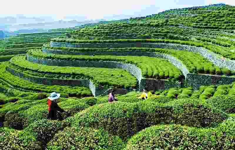 2021年茶叶行业最新税收筹划方案