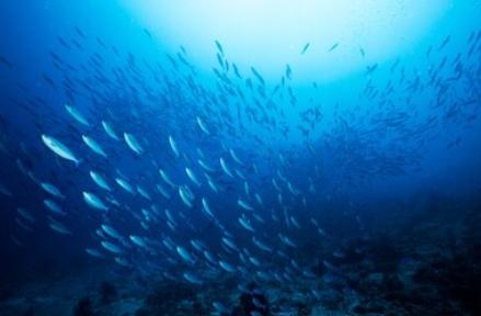 渔业税收筹划中的优惠政策有哪些?