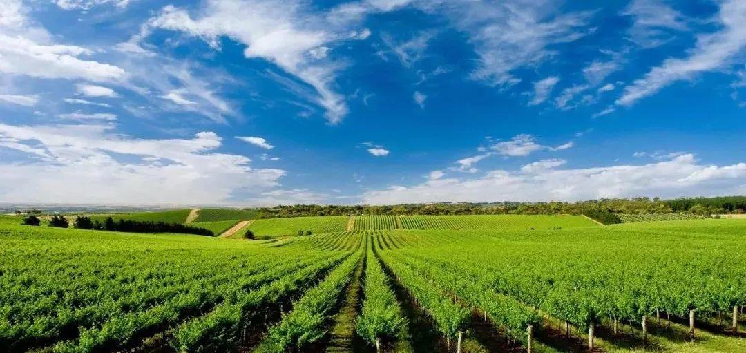 农业税收筹划方案分析,怎么将筹划做好?